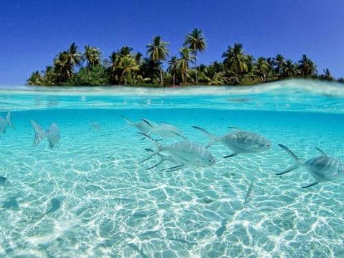 THE ISLAND OF MOROTAI