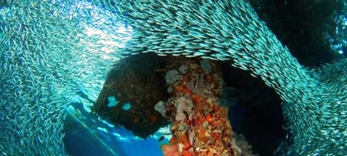 Amazing Places You Need Visit In Wakatobi - 6 amazing underwater attractions
