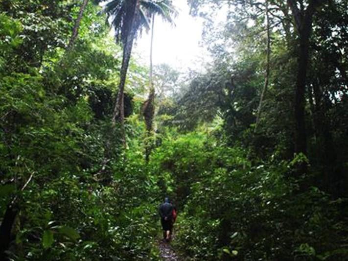 Goede Gigantische Tropische Regenwouden en Unieke Bedreigde Natuur in IT-76