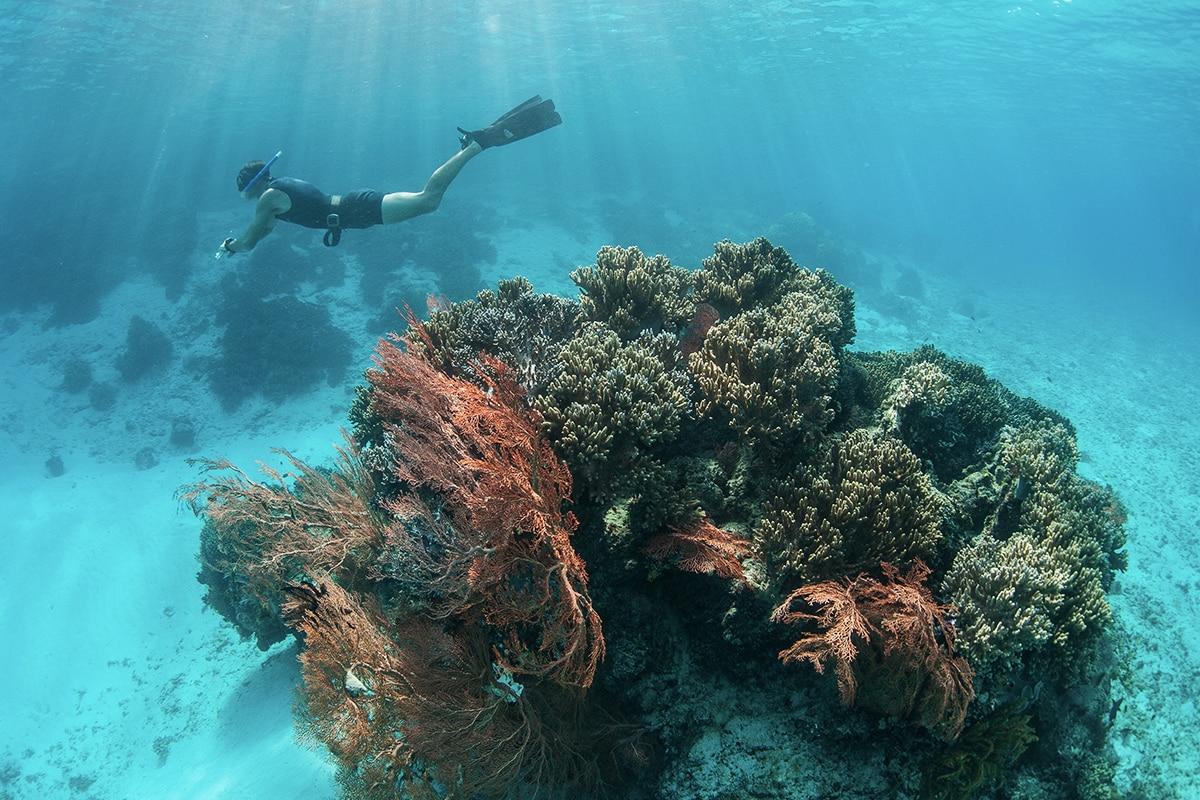 Seorang penyelam dan pemandangan terumbu karang yang indah